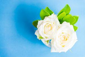 White rose in vase glass